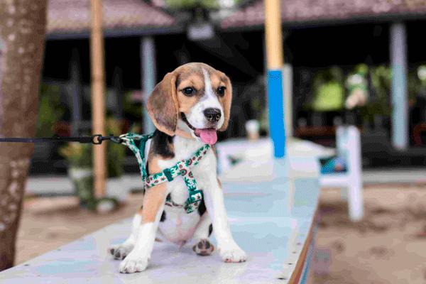 guide til de bedste hundesnore hvalpe