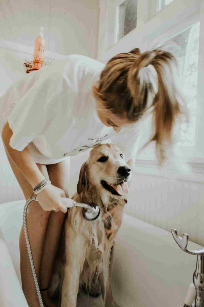 hunde hvalpens første bad