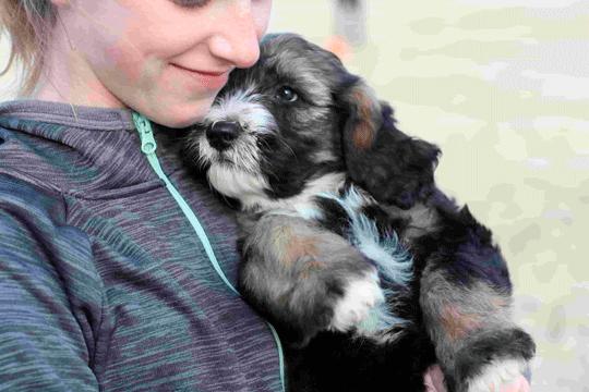 Er jeg klar til hundehvalp? Guide til familien