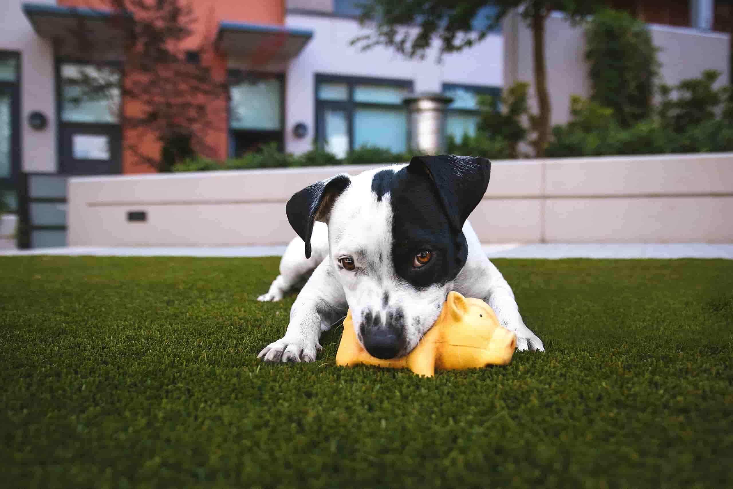 legetøj til hundehvalpe anbefalede produkter