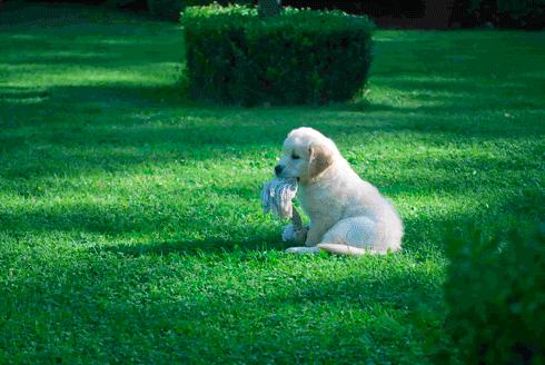 praktiske indkøb til hundehvalpe